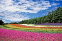 Nama-nama Bunga dalam Bahasa Jepang